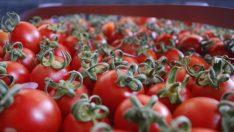Rusya, domateste ithalat izinini genişletebilir