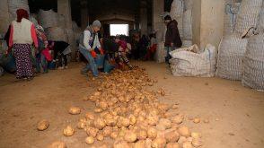 Sertifikalı Ahlat patatesi tohumları yurt dışı pazarında