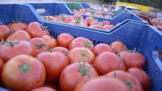 Rusya'ya domates ihracatı arttı